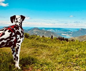 Panoramic views in your hiking holiday with your dog