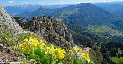 Wandertour am Wendelstein mit Bergpanorama und Blume