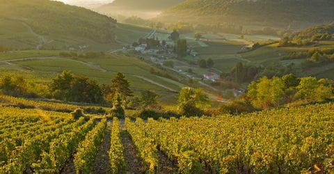 Genusswandern in der Weinregion Burgund