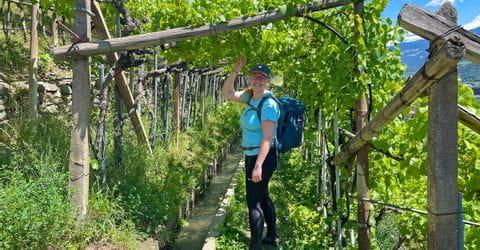 Hiker in the vineyards in Vinschgau<br/>