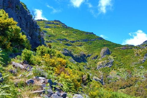 Green meadows and mountain trails on Madeira island