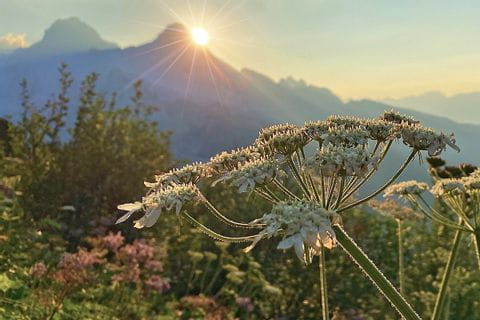 thawed flowers and beautiful sunrise behind the peaks on the Trans Tyrol