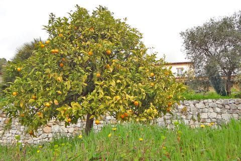 Fruit trees with regional fruits next to the hiking trails
