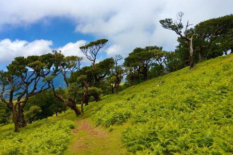 Charakteristische Vegetation auf Madeiras Wanderwegen