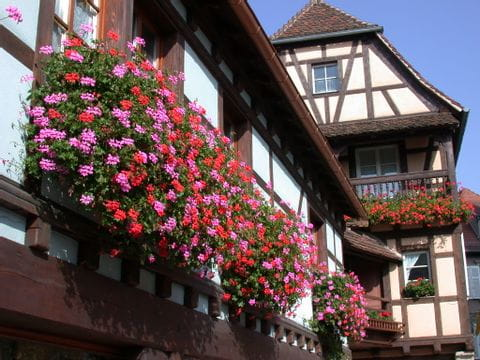 La maison à colombage mit wunderschönen Blumen auf der Wanderreise besichtigen