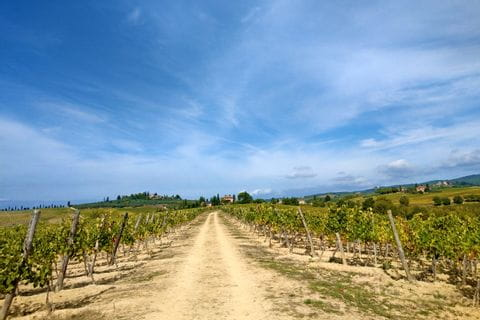 Via Romea leads through the vineyards