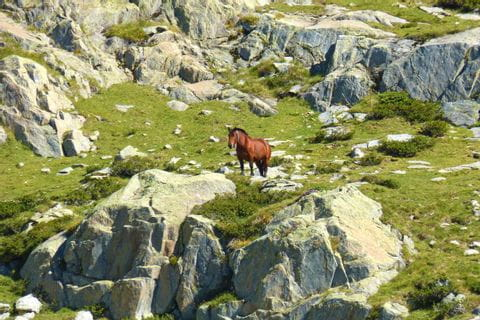 Horse in the mountains of the Pyrenees