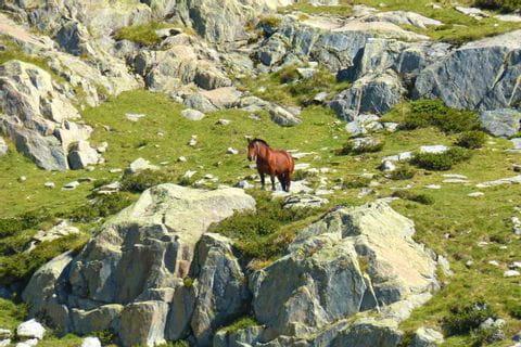 Pferd im Gebirge der Pyrenäen
