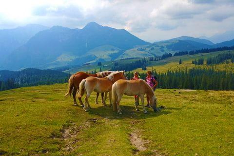 Pferde am Almwanderweg im Salzkammergut