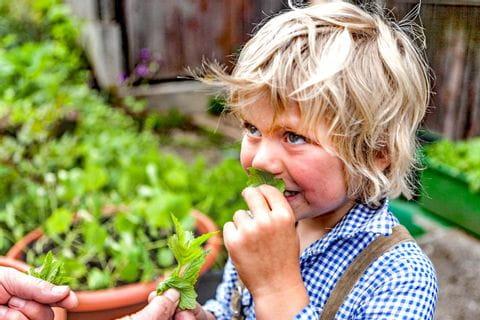 Boy smells at herbs