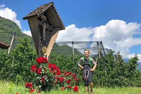 Apfelhaine in Südtirol