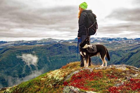 Spannende Wandererlebnisse beim Wandern mit Hund