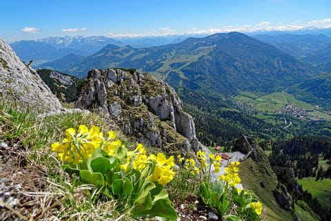 Hiking tour on moutain Wendelstein with mountain view and flowers