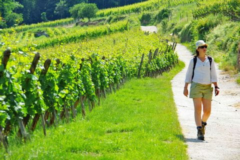 Hiking with sunlight through the wine area with