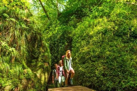 Forest path on the Rennsteig