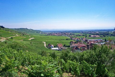 Fantastic view of the wine fields during the hiks