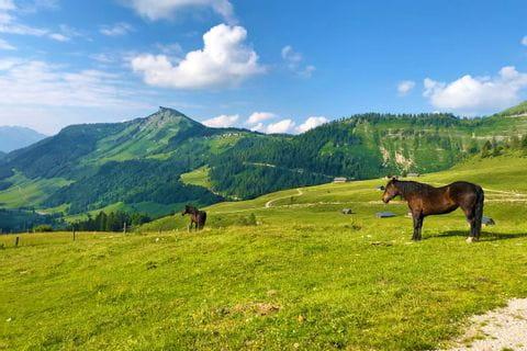 Horses on Salzkammergut's pastures