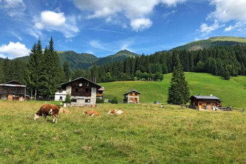 Grazing cows next to the huts in Val Visdende