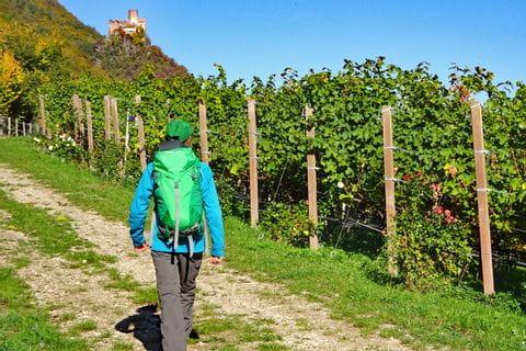 Wanderer inmitten der bunten Weingärten Südtirols