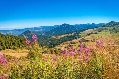 Wildblumenwiesen und Panorama auf der Wanderreise in der Auvergne