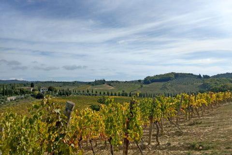 Ausblick auf die toskanischen Weinreben