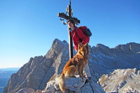 Gipfelerlebnisse beim Wandern mit Hund