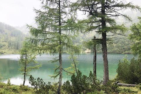 Blick aus dem Wald auf den Steirersee