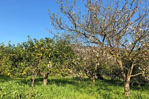 eurohike-walking-tours-mallorca-almond-blossoms