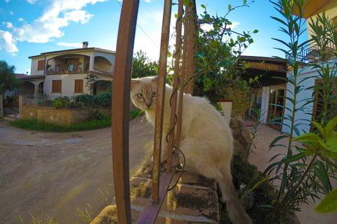 Katze am Wanderweg an Sardiniens Ostküste