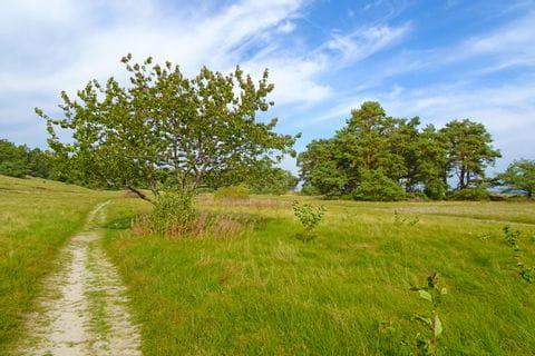 Wanderweg am Österlenleden