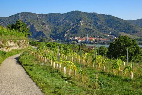 Hiking trail with view onto vineyards and the ruins of castle Dürnstein