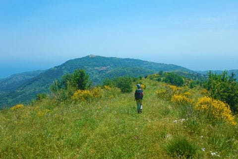 Hiking trails through the blooming flora of the Cilento