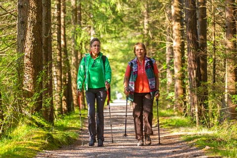 Wanderungen durch die Wälder am Maximiliansweg