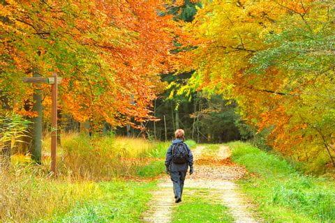 Wanderung im Herbst
