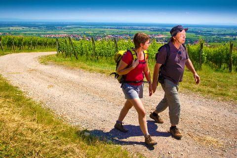 Wandern auf Forststraßen durch die schönen Weingärten