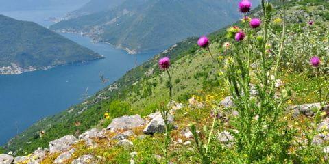 montenegro_separator