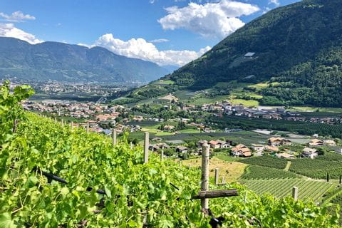 Panoramic view of the vineyards of Merano
