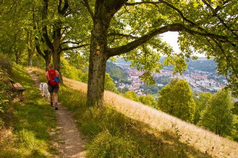 Hiking with a dog in the Altmühltal valley