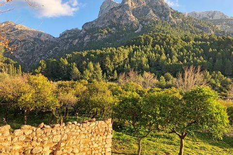 Obstbäume auf Mallorca