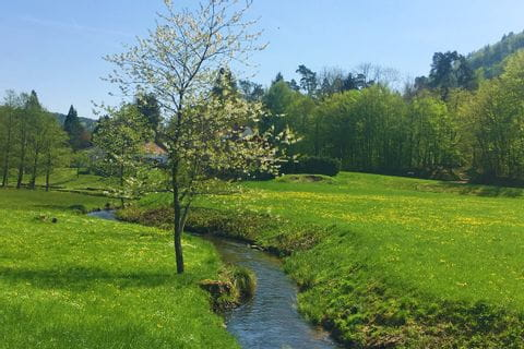 Hiking along the stream through the beautiful green landscape of Alsace