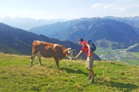 Wanderer mit Kuh auf den Salzburger Gipfeln