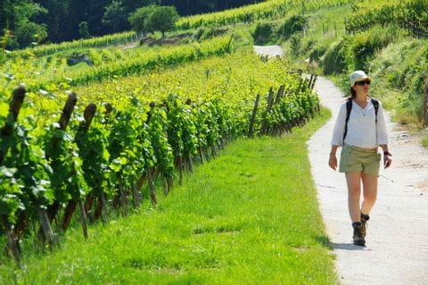 Wanderer auf guten Wanderwegen in den Weinbergen