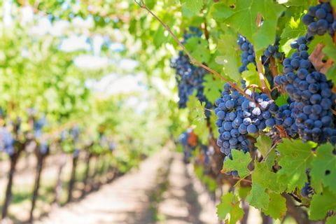 Weinhänge im Wanderurlaub entdecken