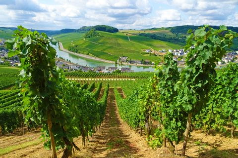 Breathtaking panorama in Nittel on the Moselle