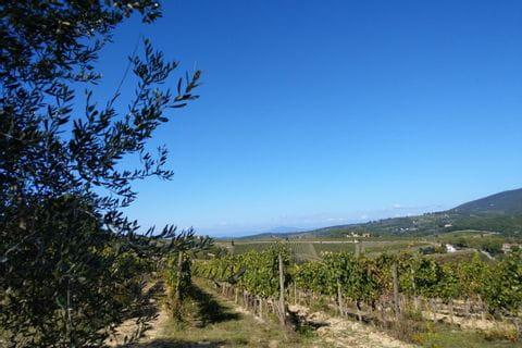 Ausblick auf die Weinreben der Toskana