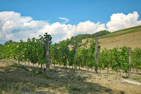 Vineyards on the hiking trail Alpe Adria Trail