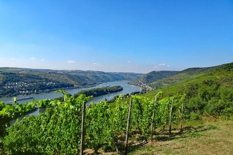 Hiking trails through vineyards on the Rheinsteig