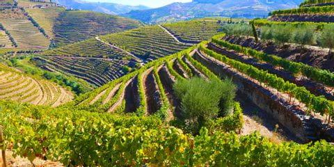 Weinbaugebiet im Douro Tal