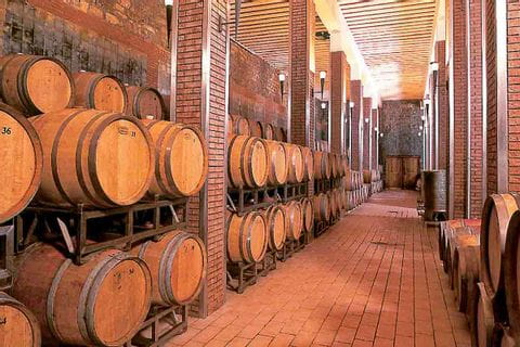 Visiting a wine cellar on the hiking trail in Istria