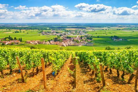 Wonderful walking views to wine rebs in Burgundy